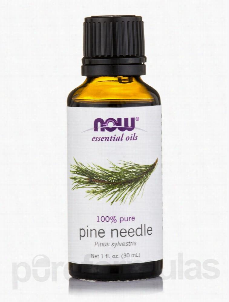 NOW Aromatherapy - NOW Essential Oils - Pine Needle Oil - 1 fl. oz