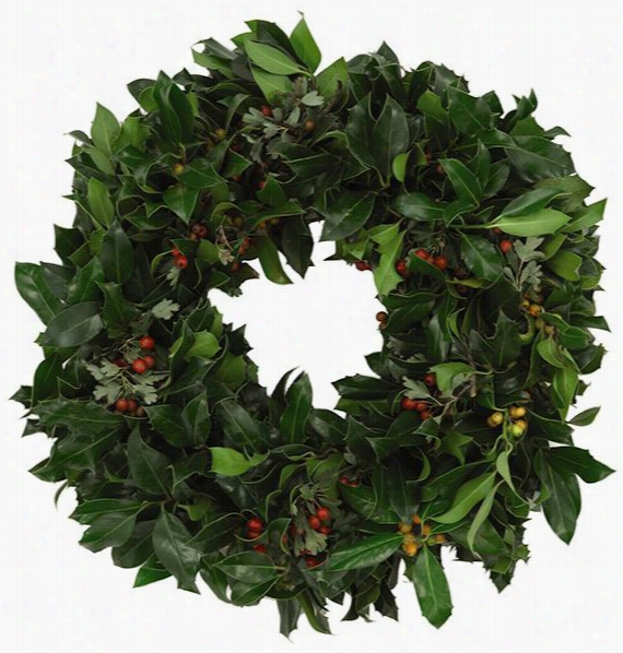 "English Holly Wreath - 16"" Diameter, Holly"