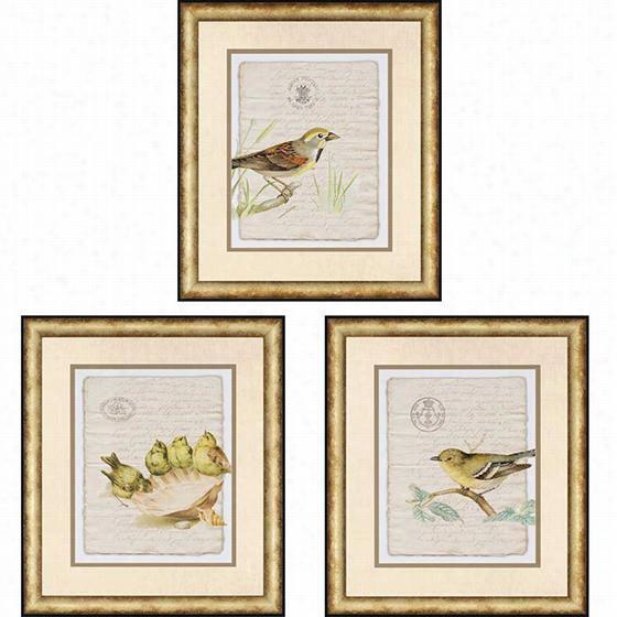 Birds On Document Framed Wall Art I - Set Of 3 - Set Of 3, Tim Burney