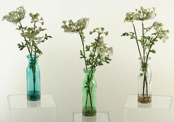 Queen Anne's Lace - Set Of 3 - Set Of 3, Clear