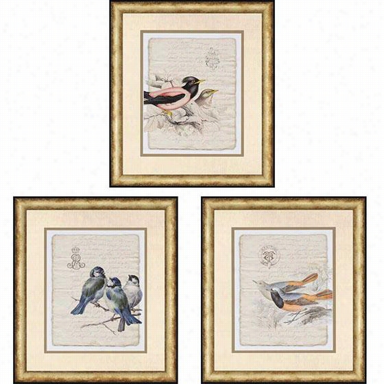 Birds On Document Framed Wall Art Ii - Set Of 3 - Set Of 3, Tim Burney