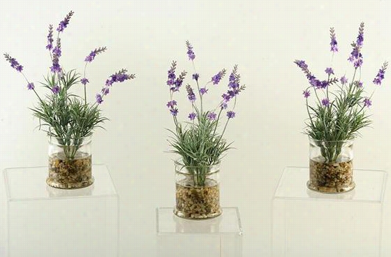Lavender - Set Of 3 - Set Of 3, Clear