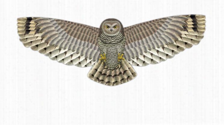 Birds of Prey Kite Assortment